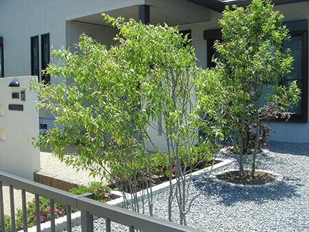 常緑樹か落葉樹