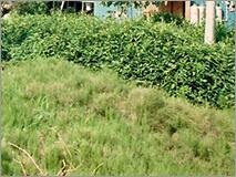 雑草防止の外構工事