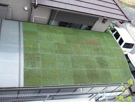 カーポートの芝緑化