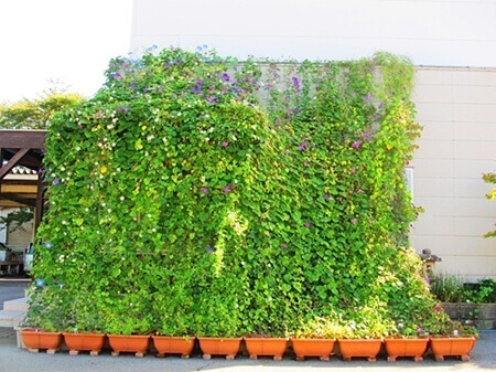 緑のカーテン・壁面緑化パネル
