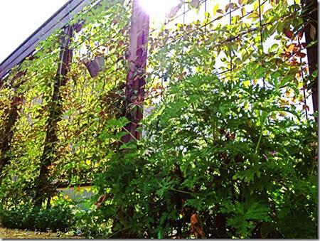 つる植物目隠しフェンス