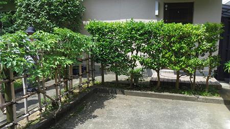 樹木や植栽による目隠し